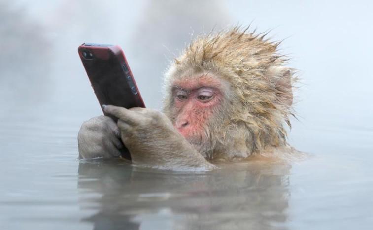 intelligent monkey